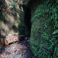 A fern wall and the entrance to the waterfall.- Sombrio Beach