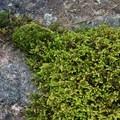 Mossy boulders dot Little Tupper Lake's shore.- Little Tupper Lake Canoe Camp