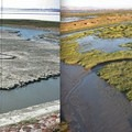 Before and after photos of salt pond restoration work in San Francisco Bay. (Photo courtesy of Cris Benton.)- Save The Bay: A Partnership for Restoration