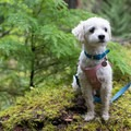 Elfie taking it all in.- A Guide to Summer Adventuring with Your Dog