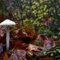 An unidentified mushroom growing in the Willamette Foothills.- Where to Find Mushrooms in the Pacific Northwest