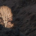 A tree catches the sunlight on the Pike Creek Mine Hike.- Instagram of the Week - May 22