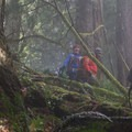Nathaniel, Jared and Vik navigating the forest understory.- Devils Staircase is Wilderness in its Purest Form