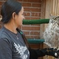 Training a Great Horned Owl at Wildlife Rehabilitation Northwest Tucson.- Woman In The Wild: Sirena Rana Dufault