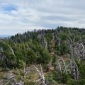 Rocks, rocks, and more rocks.- Bikepacking the Oregon Timber Trail