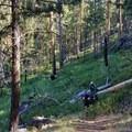 Pushing bikes out of Silver Marsh Creek.- Bikepacking the Oregon Timber Trail