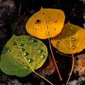 Beads of dew on early autumn leaves.- 25 Favorite National Forests for Adventure
