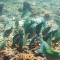 Diving with Ocean Sound dive school.- An Adventure Guide to Koh Tao: Exploring a Thai Paradise