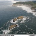 An aerial view of Three Arch Rocks National Wildlife Refuge along the northern Oregon Coast.  Photo courtesy of Roy Lowe/USFWS.- Counting Birds: Annual Aerial Seabird Surveys
