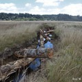Woody debris emplaced in the smaller constructed channels. Photo courtesy of Roy W. Lowe/U.S. Fish and Wildlife Service.- Bandon Marsh National Wildlife Refuge