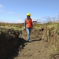 Archaeologist Theresa Molino inspecting a newly constructed tidal channel for evidence of cultural resources. Photo courtesy of Roy Lowe/U.S. Fish and Wildlife Service.- Bandon Marsh National Wildlife Refuge