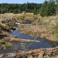 Large logs placed in Redd Creek channel provide fish habitat for coastal cutthroat trout, coho and Chinook salmon. Photo courtesy of David Ledig/U.S. Fish and Wildlife Service.- Bandon Marsh National Wildlife Refuge