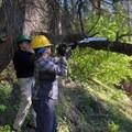 Amber helping Patti trim a trecherous tree.- The Bold Betties: Idaho Trails Association Women's-Only Trail Maintenance