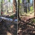 Success!- The Bold Betties: Idaho Trails Association Women's-Only Trail Maintenance