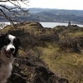 Taking in a view of the Columbia River Gorge.- Dog Etiquette on the Trail