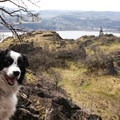 Taking in a view of the Columbia River Gorge.- A Guide to Summer Adventuring with Your Dog