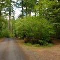 Beacon Rock State Park Campground- Beacon Rock State Park Campground