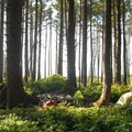 The campground's hiker/biker camp.- Cape Lookout State Park Campground
