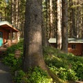 Campground's cabin area.- Cape Lookout State Park Campground