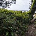 Undergrowth at Hobsonville Point.- The Tillamook Bay Heritage Route