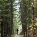 The town of Fernie has wide open trails and singletrack galore.- A Guide to the Best Mountain Biking in Golden, Kimberly, and Fernie, British Columbia