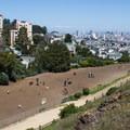 Corona Heights Park off-leash dog area.- Dog-Friendly Trails Near San Francisco