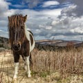 Pony of Grayson Highlands. - Stunning Fall Adventures in the Central Appalachians