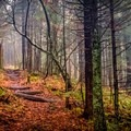 Hiking a section of the Appalachian Trail that runs right on the Tennessee-North Carolina border.- 10 Breathtaking Photos of Autumn in the American Southeast