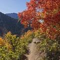 Rattlesnake Gulch.- 5 Ways to Experience Autumn in Utah