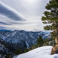 A gorgeous pine that greets you at the top.- Snow Climbing the Baldy Bowl