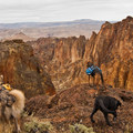 Do you think dogs enjoy a good view as much as we do?- Dog Etiquette on the Trail