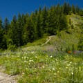 A wildflower-lined trail on the climb to the summit of Zigzag Mountain.- Incredible Hikes for Alpine Wildflowers