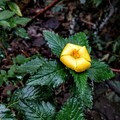 Flowers of Nounou Mountain.- Hawaii's Best Day Hikes