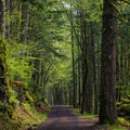 Dense forest surrounds the gravel road to the falls.- Shellburg Falls Loop Hike