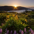 Sunrise on Rowena Crest above the Columbia River.- Our Amazing River Basins