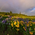 A rainbow on Rowena Crest with balsamroot and lupine.- Columbia River Gorge National Scenic Area