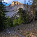 Light on Wheeler Peak through the trees.- Wheeler Peak