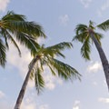 Wind in the palms add some relaxation to the senses.- Ma'ili Beach Park