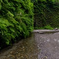 Fern Canyon, Prairie Creek Redwoods State Park.- Redwood National + State Parks