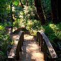 Little footbridge toward the beginning of the trail.- Toketee Falls
