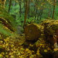 Leaves on the trail to University Falls in autumn.- Oregon Fall Photo Contest