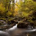 McDowell Creek above Majestic Falls.- Oregon Fall Adventures