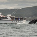 Whale watching charter outside of Depoe Bay, Oregon.- The Oregon Coast's Best Places for Whale Watching