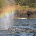A gray whale (Eschrichtius robustus) spouts outside of Depoe Bay, Oregon.- The Oregon Coast's Best Places for Whale Watching