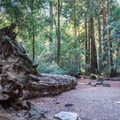 Large redwoods tower over Sempervirens Campground.- Guide to Bay Area Camping