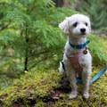 Elfie taking it all in.- Dog Etiquette for Coastal Adventures