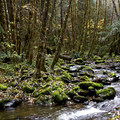 An unnamed tributary of Deception Creek.- 10 Classic Hikes Near Eugene, Oregon