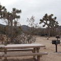 Typical sites at Ryan Campground, Joshua Tree National Park.- Guide to Camping in Joshua Tree National Park