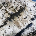 Cormorants and brown pelicans nest on the cliffs at La Jolla Cove.- San Diego's Best Beaches