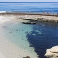 Children's Pool, full of visitors.- San Diego's Best Beaches
